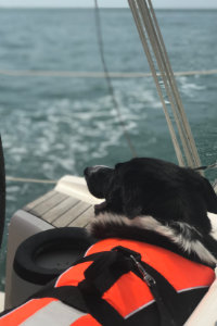 Dog wearing a life jacket on a yacht